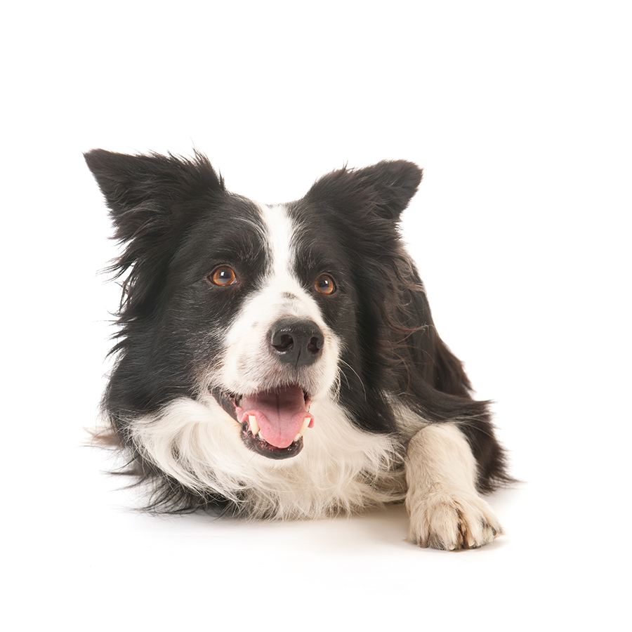 G And H Border Collies Home - The Dog Man's C...