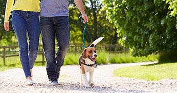 blue dog leads