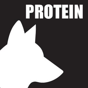 NUTRITION-DOG-PROTEIN