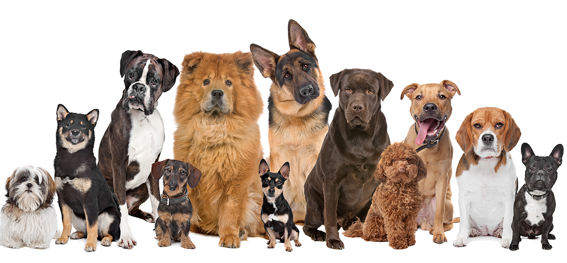 Super premium dog food for breeds large and small