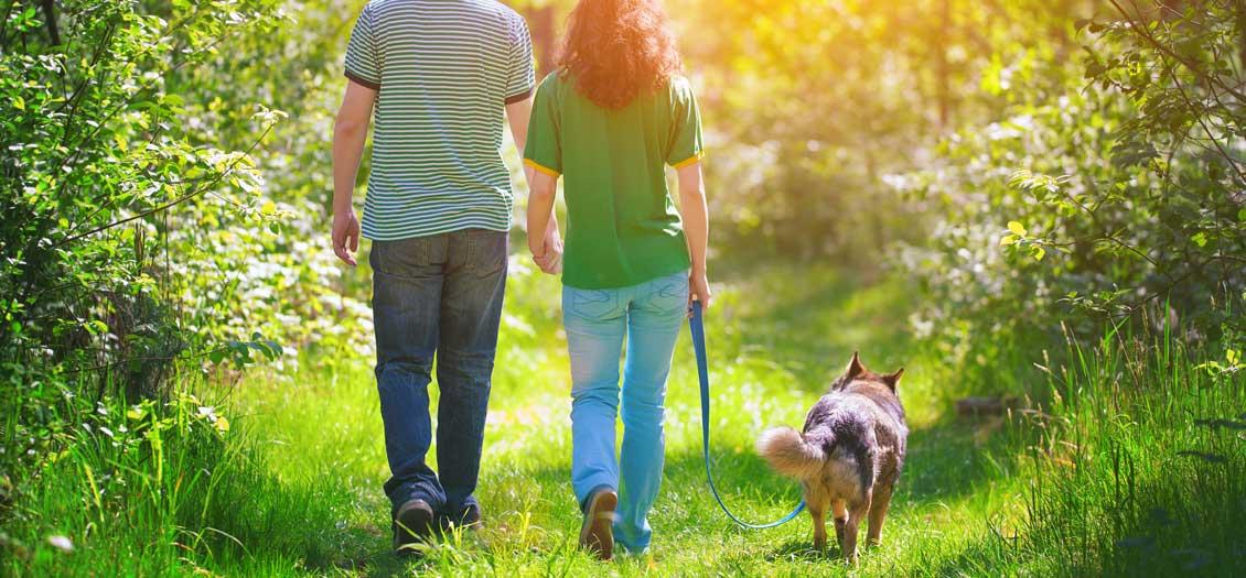 BioThane dog leads