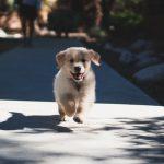 Healthy Grain Free Puppy Food