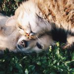 Cat and Dog Food, what is the difference?